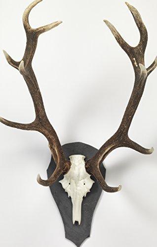 Trophäenschiefer Gehörnbrett Geweihbrett aus Schiefer für Rothirsch und Damhirsch 49 x 27,5 cm