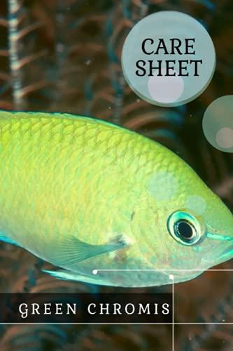 Green Chromis: Care Sheet