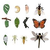 YARNOW 3 Juegos de Ciclo de Vida de Insectos Mariposas Abejas Libélulas Figura de La Ciencia Modelo de Juguete Evolución Juguetes Proyecto Escolar Educativo para Niños Pequeños