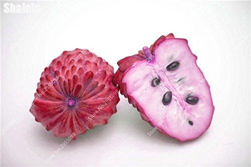 15pcs/sac Heirloom sucre Graines Succulent ANNONA Squamosa comestible tête Fruit de Bouddha Jardin Custard Planta Easy Grow 6