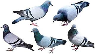 Set of 5 Waterproof Temporary Tattoo Stickers Blue Pigeon Birds Cute