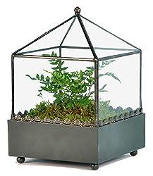 Square Glass Plant Terrarium Container
