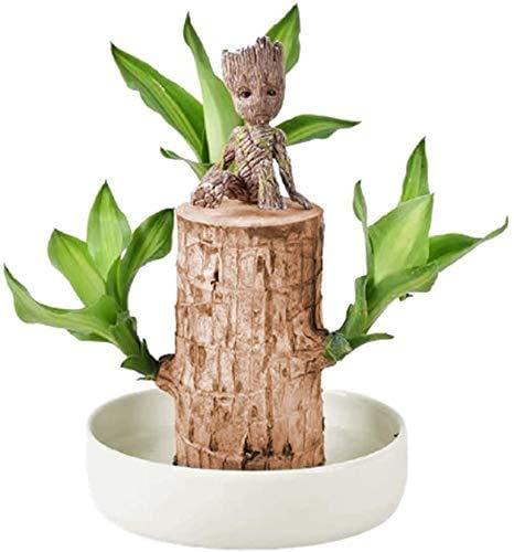 MAQRLT Mini Brazilianische hölzerne Topfpflanzen Sauber Luft Glück Holz Groot Blumentopf Hydroponische Pflanzen Indoor Wasserkultur Desktop Grüne Pflanzen mit Becken und Groot