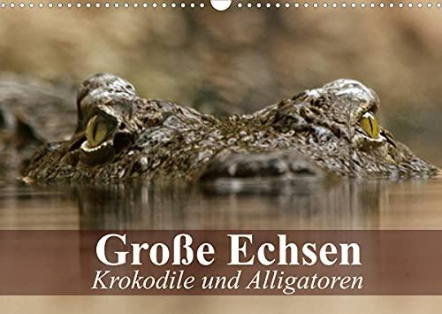 Große Echsen. Krokodile und Alligatoren (Wandkalender 2022 DIN A3 quer)