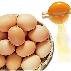 水郷のとりやさん 鶏卵 平飼い 放し飼い自然卵 25個詰 20個+破損保障分5個 有精卵 冷蔵便限定