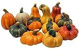 khevga Herbst-Deko Zierkürbis Deko-Kürbisse aus Terracotta 12er Set