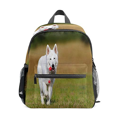 Kids Backpack Preschool Kids School Bag Boy Girl Lightweight Shoulder Book Bag for 1-6 Years Old Perfect Back Pack for Toddler to Kindergarten Swiss Shepherd Dog White Training