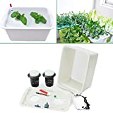 220V Plant Site Hydroponic System 2 Holes Indoor Garden Cabinet Box Grow Kit