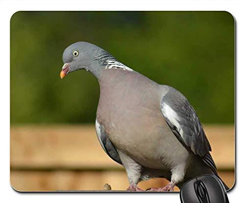 Mouse Pad Woodpigeon Pigeon Side Forward View Hochgelegener Gartentisch Diy Spielmatte Büro Standardgröße Gedruckte Personalisierte Gummitastatur 25X30Cm Mauspads Tisch Rutschfest