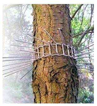 Ceinture d'arbre en fil de 37 pièces contre les chats, animaux grimpeurs