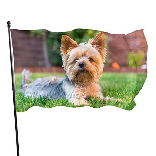 Yorkshire Terrier Malvorlagen Gartenflaggen Wohnaccessoires für drinnen und draußen, dauerhafte Hofflagge