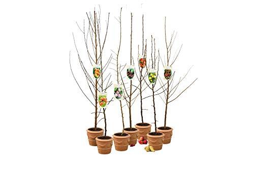 OH2 - 11.1 - Obstbäume AA Qualität, 5...