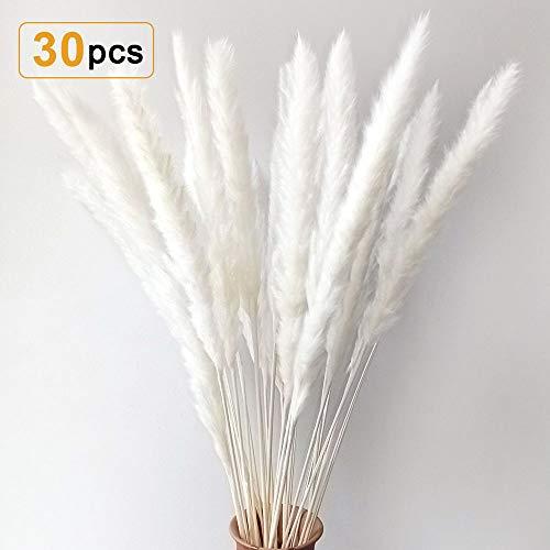 Sporgo 30 Stück Pampasgras Getrocknet Deko Pampas Gras Natürliche Trockenblumen Blumenstrauß Deko für Inneneinrichtungen Fotografie Wohnzimmer Schlafzimmer Hochzeit 60CM (Weiß)