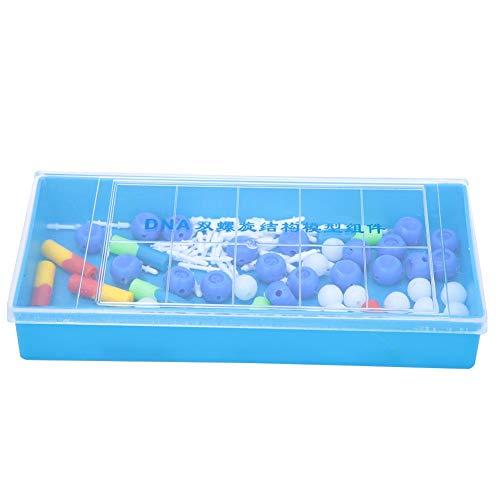 DNA-Modell für den naturwissenschaftlichen Unterricht liefert PVC-Doppelhelix-DNA-Modell Biological Molecular(DNA Model)