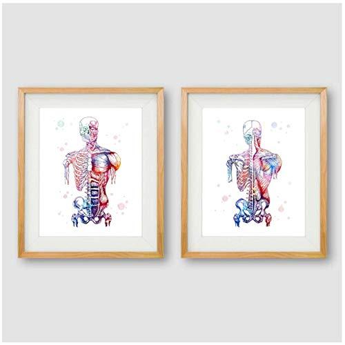Mmdianpu Músculos Humanos Lienzo Lámina y póster Sistema Muscular Anatomía del Esqueleto Pintura Body Art Impresión médica Decoración de la Pared (40x50 cmx2 sin Marco)