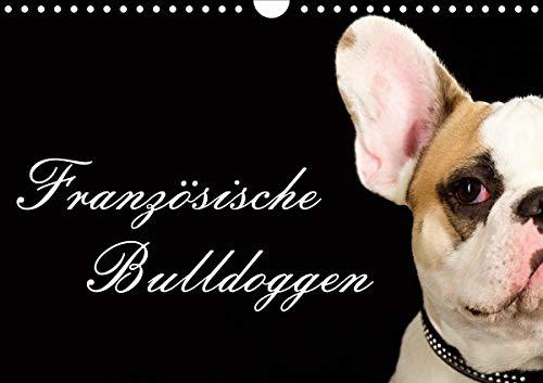 Französische Bulldoggen (Wandkalender 2021 DIN A4 quer)