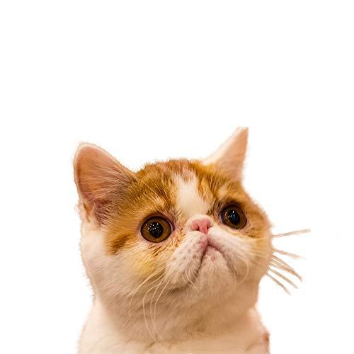 FYNIGO Giochi per Gatti Interattivo Giocattoli per Gatti e Cani Funzione 2 in 1 e un Mouse Giocattolo(2 pezzi)