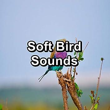 Soft Bird Sounds