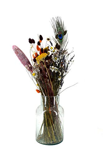 Dutch Masters in Dried Flowers Trockenblumenstrauß Terracotta | EIN Hingucker in jeder Vase | Trockenblumen und Trockengräser Pastellfarben | 65 cm | Deko Blumenstrauß