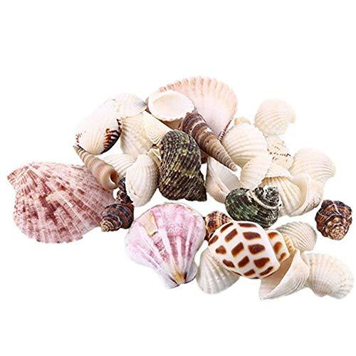 hearsbeauty Lot de 100g Coquillages de mer pour Aquarium