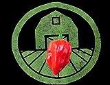 spedizione internazionale 15+ Red Savina Habanero Pepper Seeds (Peperoncino, Cile) più Caldo di Scotch Bonnet