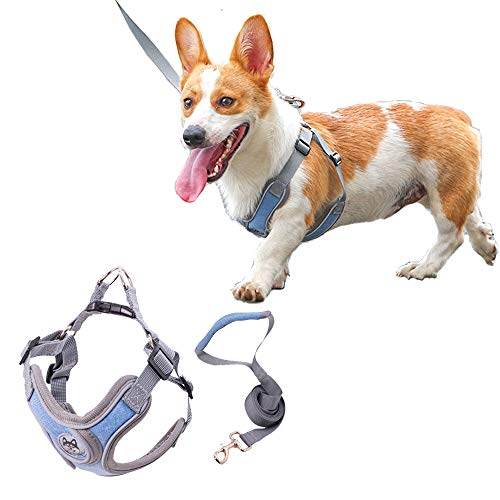 Xqpetlihai Dog Harness No Pull No Choke with Dog Leash Reflective Adjustable Outdoor Vest Padded Breathable Mesh Comfort with 2 Leash Attachments Easy Control for Small Medium Dogs(M-Blue)