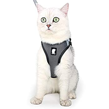 Harnais et laisse pour chat ultra léger pour la marche et l'évasion - Ensemble réglable en maille souple - Avec rembourrage rembourré, veste de course - Pour chaton et animaux de compagnie chiot