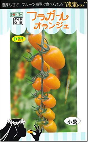 ミニトマト 種子 フラガール オランジェ 8粒 とまと