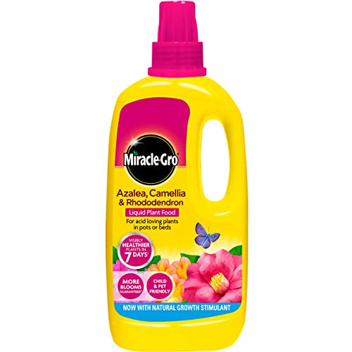 Miracle-gro Azalea, Kamelie & Rhododendron Konzentriert Liquid Pflanzendünger 1L
