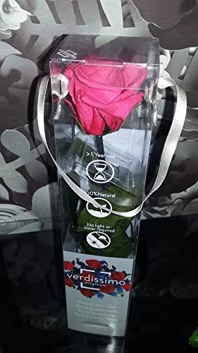 Verdissimo Rose Estabilizado Rosa