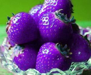 Graines de fraises mélangées Bleu géant Rouge Violet, Paquet professionnel, 100 graines / Pack, 100% True Fruits Variété