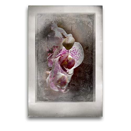 Premium Textil lienzo 50 cm x 75 cm de alto, un diseño del calendario Shabby – Orquídea, interpretación en viejos tableros de foto, cuadro de pared, lienzo de impresión (CALVENDO);CALVENDO arte