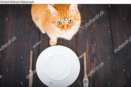KwikMedia Poster of Hungry cat Near an Empty Plate and Cutlery on a Wooden Table