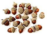 Real Dried Natural Acorns - Package of 75
