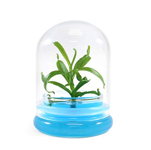Miniature glass terrarium