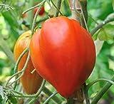 30 Graines de Tomate Cœur de Bœuf - Véritable légume ancien - méthode BIO