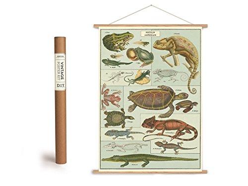 Vintage Poster Set mit Holzleisten (Rahmen) und Schnur zum Aufhängen, Motiv Reptilien, Amphibien