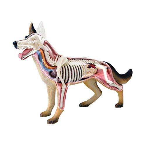 CRXL shop-Mantas Eléctricas Anatomía Animal Científica, Modelo Animal De Perro 4D Ensamblar La Anatomía del Esqueleto del Órgano, Kit De Modelo De Anatomía De Perro Lobo Modelo De Enseñanza Médica