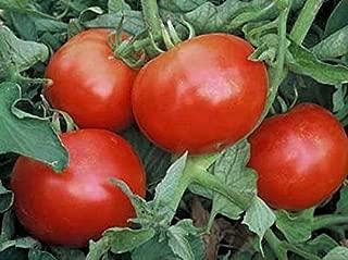 Best mountain pride tomato Reviews