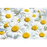 GREAT ART® Mural de Pared – Prado Margaritas – Paraíso Naturaleza Flores Blancas Salón Flores Bienestar Grandes Y Plantas con Motivos Foto Tapiz Y Decoración (210 x 140 cm)