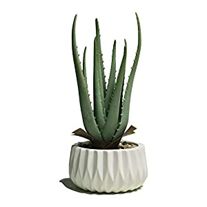 Silk Flower Arrangements Noble House Potted Artificial Plant Decoration,Faux Natural Aloe Plant in Ceramic Pot, Gift Color Box Packing for Mother's Day, Faux Succulent with Elegant Ceramic Pot Planter (White, Large)