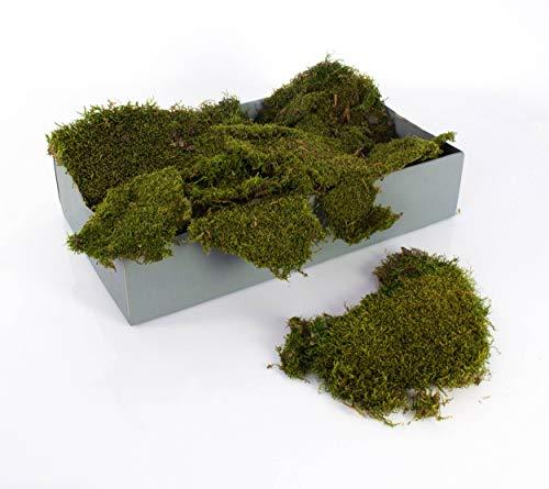 artplants.de Plaques de Mousse décorative, Vert Naturel, 2kg - Mousse Naturelle - Mousse sèchée