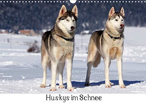 Huskys im Schnee (Wandkalender 2021 DIN A3 quer)