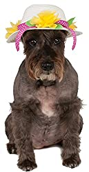 Easter Outfits For Dogs - Small brown dog wearing an Easter bonnet.