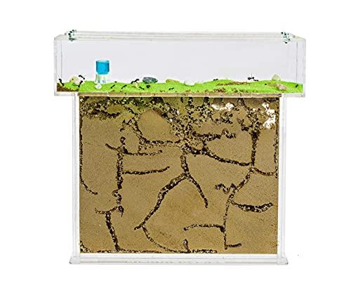 AntHouse.es - Hormiguero Natural de Arena   Kit T Big Acrílico 25x20x1,5 cm   Hormigas Incluidas
