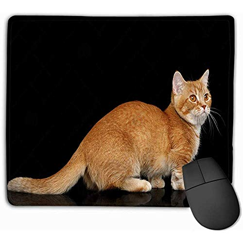 Alfombrilla para ratón, Alfombrilla para ratón Gato Munchkin Fondo Negro Rojo Permanente Aislado Vista Lateral 25 * 30CM