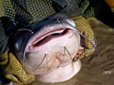 Raising Catfish in the Desert
