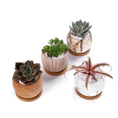 Contenedor de plantas Pote de planta suculenta cerámica con paquete de bandejas de bambú de 8 -...