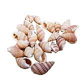 100 Piezas de Conchas de Mar Conchas de Conchas Marinas de Playa para Pecera Acuario Decoraciones para El Hogar