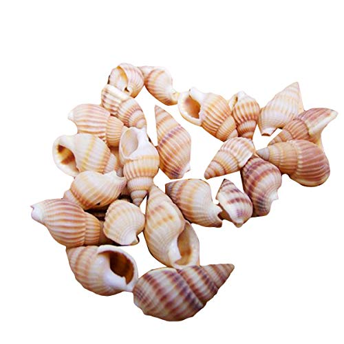 Queen.Y 100pcs Conches Sea Shells Mixed Ocean Beach Seashells, Various Sizes Natural Seashells for Fish Tank, Home Decorations, Beach Theme Party, Candle Making, Wedding Decor